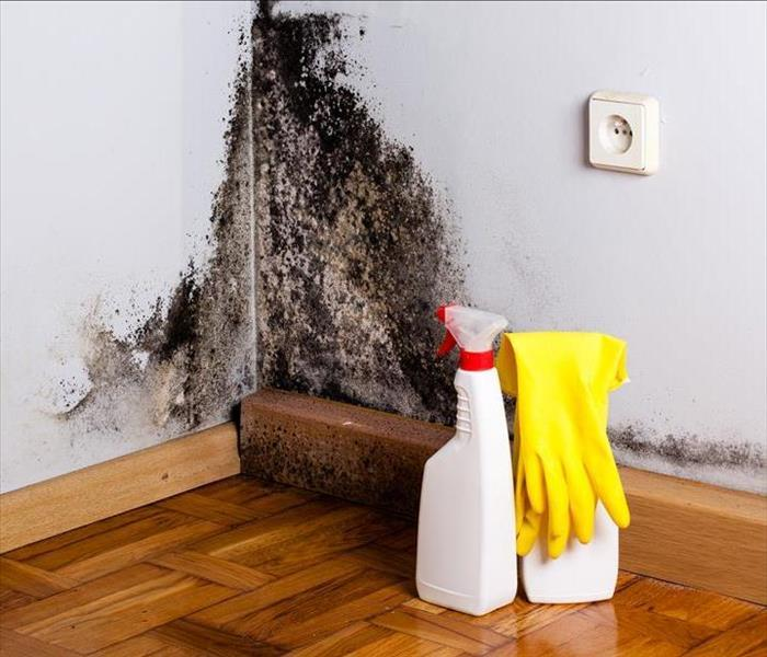 Mold Remediation If You Think You Have A Mold Problem Call SERVPRO of DTT